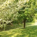 Around the grounds: Spring 2015
