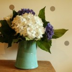 This thing I've been doing with hydrangeas