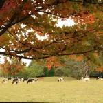 An Autumn walk in the village
